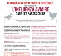 Affiche Influenza aviaire dans les basses-cours